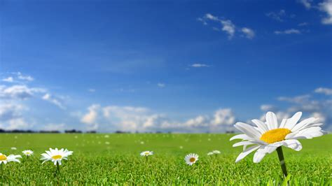 flowers sky nature light plant bloom hd wallpapers these are our nature backgrounds including some beaches
