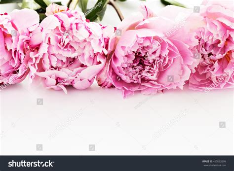 Official S Day Flower Frame Pink Peony Flower On White Stock Photo 450593299
