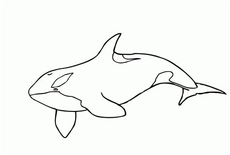 killer whales shamu coloring pages printable killer best
