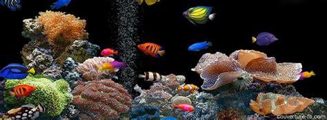 Poisson Exotique Pour Aquarium by Aquarium Poissons Exotiques