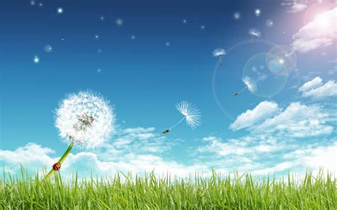 wallpaper green sky pleasant green sky background wallpapers