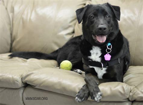 black rescue black animal rescue inc petfinder foundation