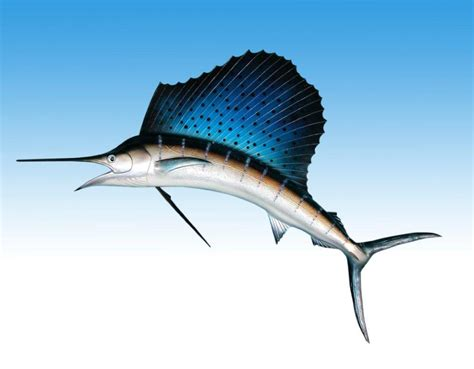 Sailfish.ca may be for sale   Inquire now ? Sailfish ? MS Domains