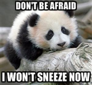 Sneezing Panda Meme - my own memes urmi joshieng 212dr carter