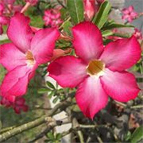 piante autunnali fiorite piante perenni da fiore autunnali speciali piante