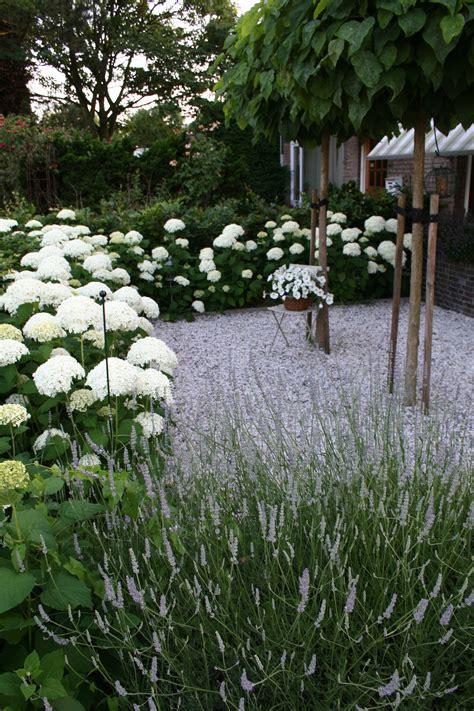 witte border bloemen border siergras met hortensia borders pinterest tuin