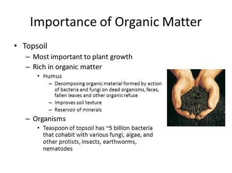 importance of matter plant nutrition chapter ppt