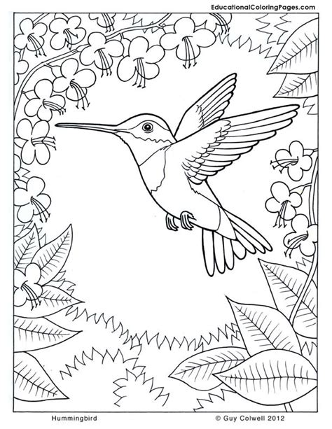 coloring pages for adults ideas coloring pages hummingbirds hummingbird coloring flower