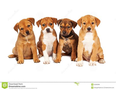 four dogs four puppies together stock image image of copy 50360999