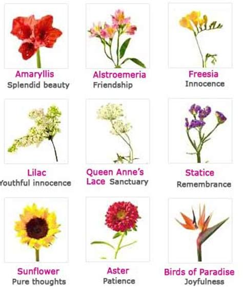 flowers and their meanings funzug com