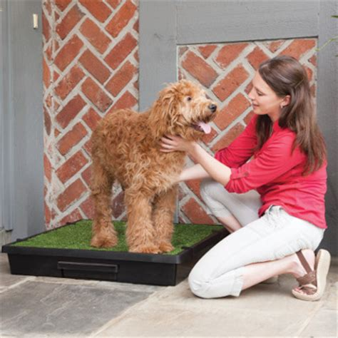 when to take puppy outside to potty how to use an indoor outdoor potty for toilet petsafe 174 articles
