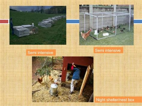Backyard Poultry Production by Backyard Poultry Production