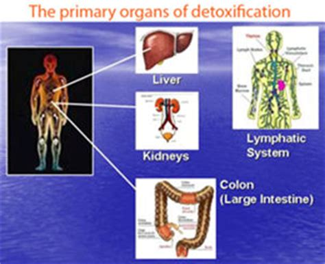 What Order To Detox Organs by Peertrainer 14 Day Fresh Start Cleanse