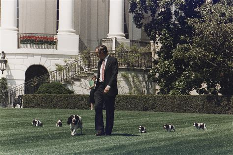white house dogs names 10 fun dog names for the us presidents dogs