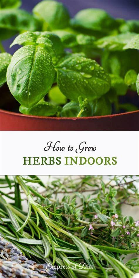 grow herbs indoors best 25 annual plants ideas on pinterest garden ideas