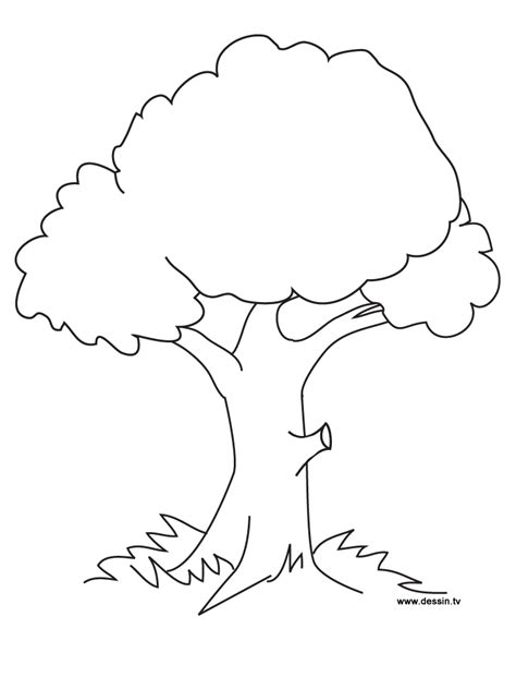 Coloring Page Of A Tree free printable tree coloring pages for