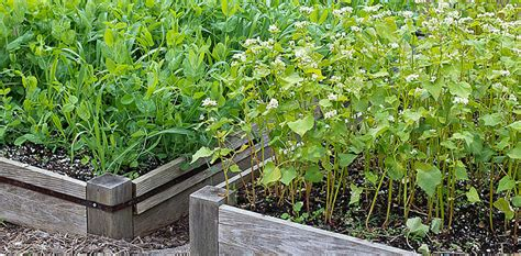 Prepare Your Vegetable Garden For Winter With A Cover Crop Preparing Vegetable Garden For Winter