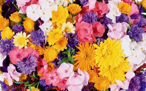 wallpapers for desktop background flowers flowers wallpapers flower wallpaper top best hd