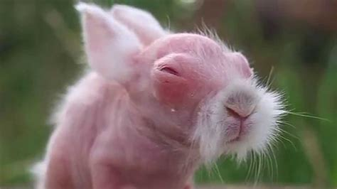 (Fugly) Animals without hair. Guess the animals   YouTube