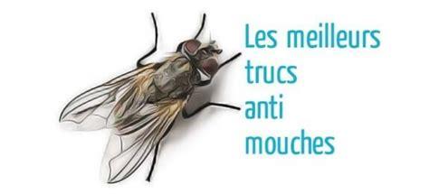 Astuce Contre Les Moucherons by Trucs Anti Mouches Astuces De Grand M 232 Re