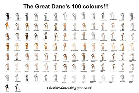 colors of great danes cheshire danes the great dane s 100 colors chart