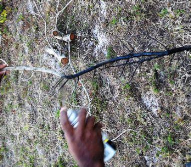 cara membuat lu hias dari ranting pohon lu ranting membuat lu hias dari ranting pohon