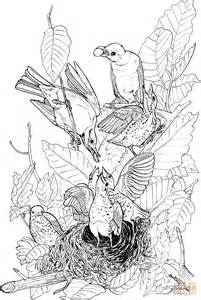 american robin coloring page american robins feeding their babies coloring page free
