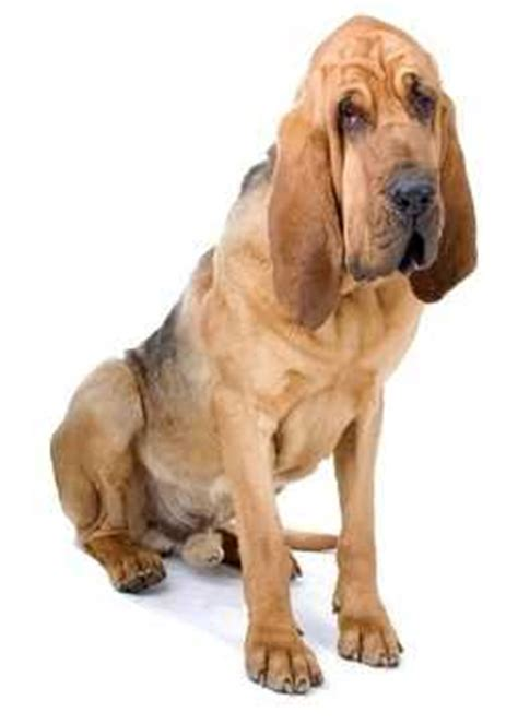 drooling a lot suddenly dogs saliva and drool breeds breeds picture