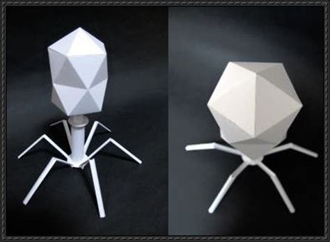 Virus Origami - science paper model enterobacteria phage t2 free