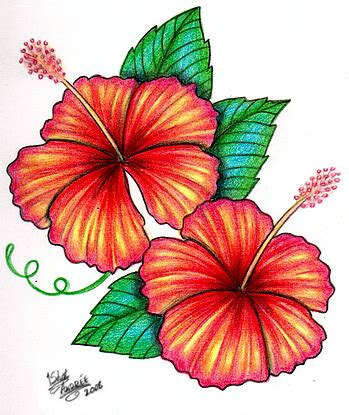 hibiscus flower design cliparts co