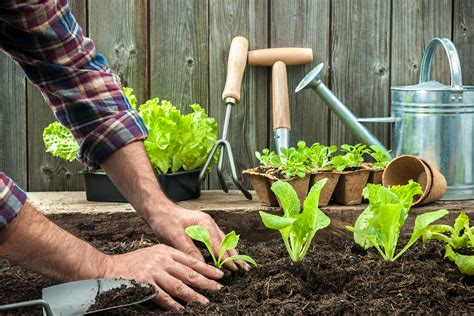 how gardening is for your health the humble gardener