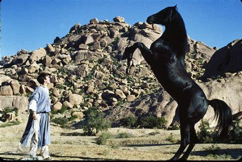 nedlasting filmer the mustang gratis download the black stallion returns movie for ipod iphone