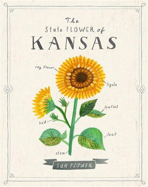 kansas sunflower 50 state flowers 1 pinterest best 25 westport kansas city ideas on pinterest