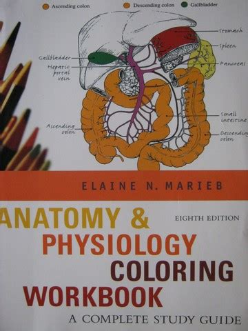 anatomy physiology coloring book by marieb pearson benjamin k 12 quality used textbooks