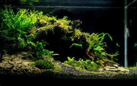 fluval spec aquascape ryan s low tech nano tank 19l fluval spec page 2 new