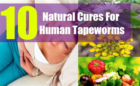 tapeworm treatment home remedy 10 cures for human tapeworms how to get rid of tapeworms in humans naturally