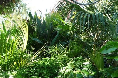tropical subtropical trees image gallery subtropical plants