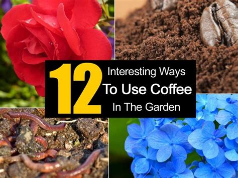 How To Use Coffee Grounds In The Garden by 12 Interesting Ways To Use Coffee In The Garden