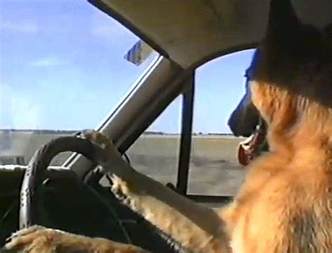 driving dogs didja wednesday 12 december 2012 driver the best commercial