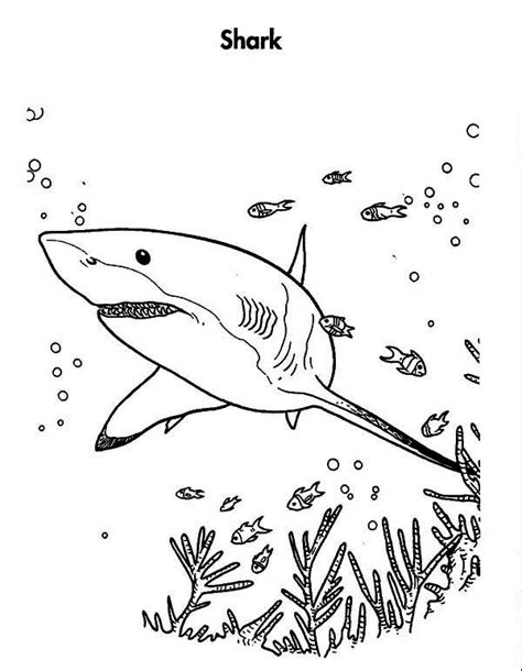 shark anatomy coloring page great white shark coloring pages printable coloring image