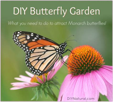 Monarch Garden by How To Make A Butterfly Garden Home Design