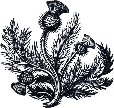 clipart domain domain thistle image the graphics