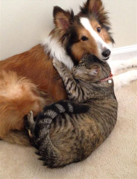 dogs cuddling 40 dogs and cats who just to cuddle