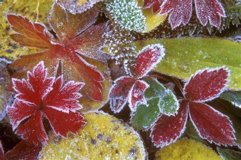 Garten Pflanzen Frostschutz by Garten