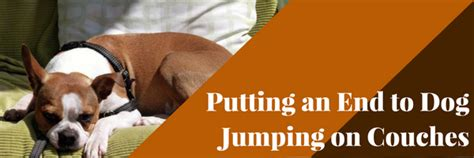 stop dog jumping on couch donald johnson author at dog training advice tips page