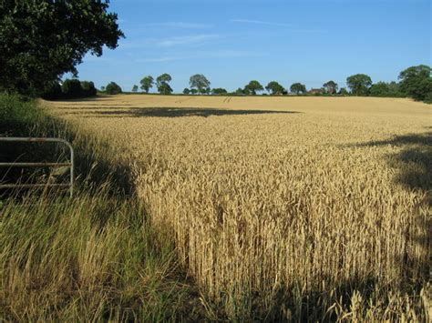 alan walker wheat fields field of wheat near newborough 169 alan slater cc by sa