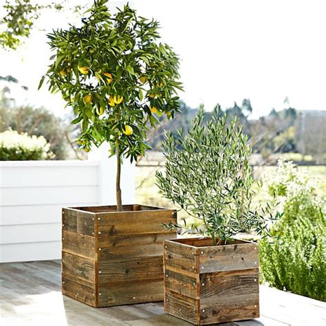 Cool Planter Boxes by 7 Duty Plants You Need In Your Home Planters