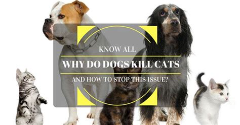 why do dogs cats why do dogs kill cats and how to stop this issue news update