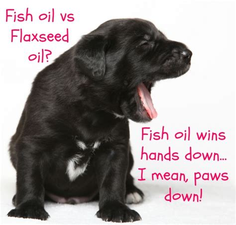 flaxseed for dogs flaxseed for dogs fish vs flaxseed