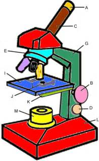 microscope coloring key